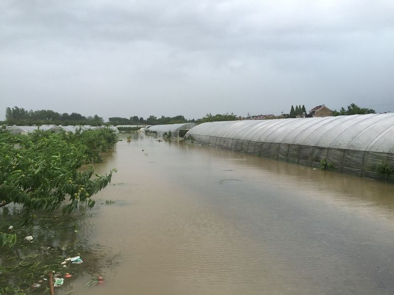 【雷马资讯】多地暴雨侵袭,大棚种植户该如何自处?