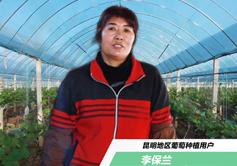 李保兰--昆明葡萄种植户