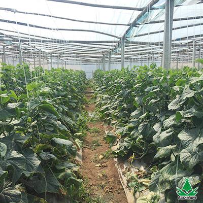 云南高温干旱来袭,作物种植该怎么办?