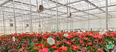 温室大棚种植高温强光,首选利凉遮阳降温剂