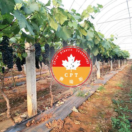 雷马赛瑞斯葡萄专用膜--选对农膜很重要