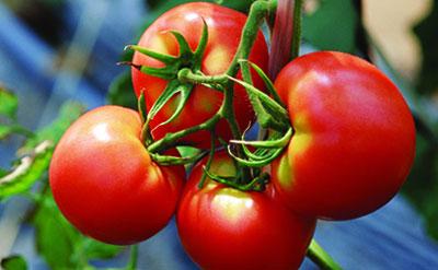 想增加农膜的使用寿命应该注意哪些?