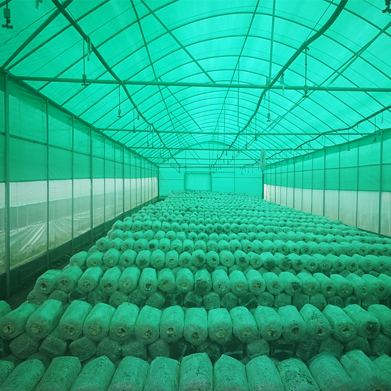 赛瑞斯ceres绿白膜 食用菌绿白膜 菌子膜 香菇膜 遮光膜
